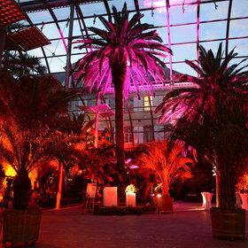Image Event: Jazz unter Palmen