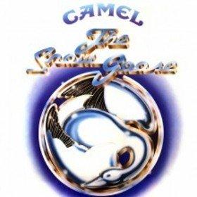 Image: Camel