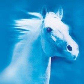 Bild Veranstaltung: eurocheval 2018 - Europamesse des Pferdes