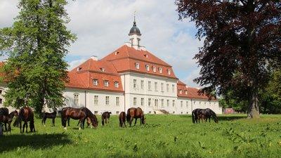 Stiftung Brandenburgisches Haupt- und Landgestüt